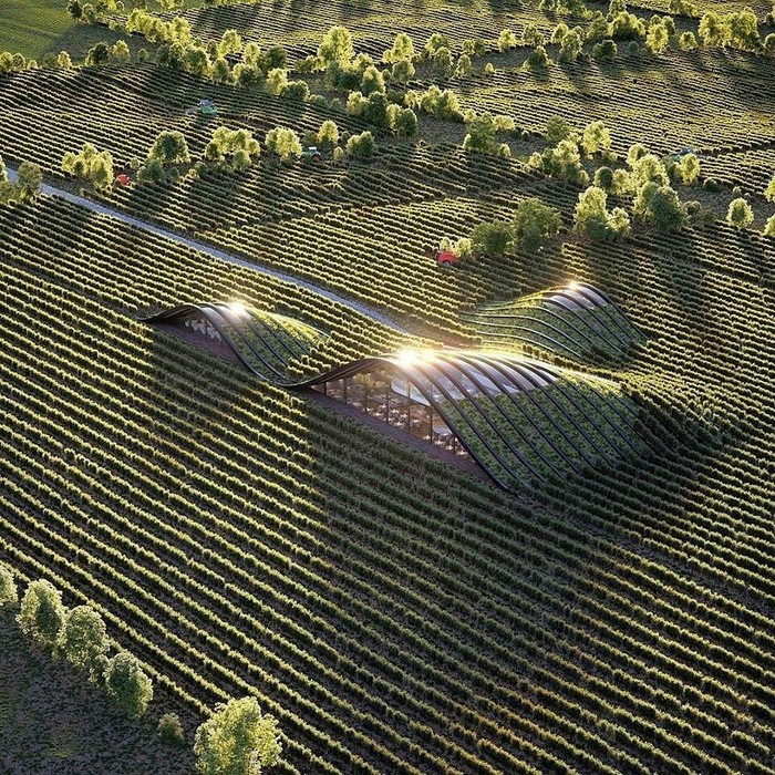 Виноградник в Кахетии, Грузия [Проект] Виноград, Виноградник, Сельское хозяйство, Грузия, Красота, Фотография, Природа, Красота природы