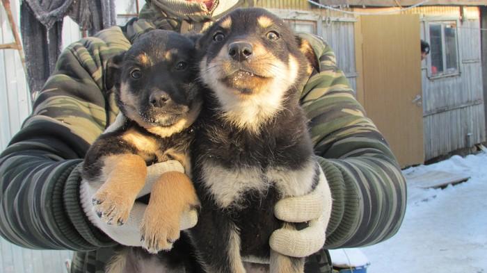 Малыши ищут дом Собака, В добрые руки, Длиннопост, Москва, Без рейтинга, Старая купавна, Щенки, Ищу хозяина