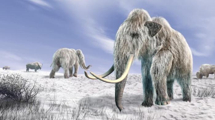 Мамонты : некоторые интересные факты, о которых вы, возможно, не знали. Мамонт, Палеонтология, История, Древность, Познавательно, Длиннопост