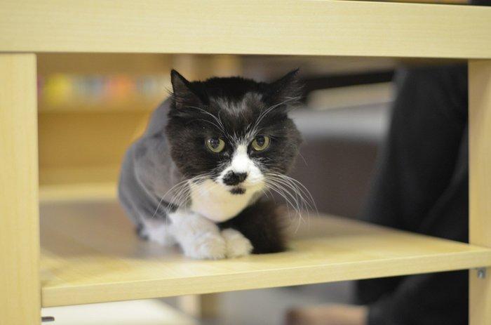 Котоистории: Батюшки, забрили уже! Утренние покатушки. Кот, Котоистории, Длиннопост