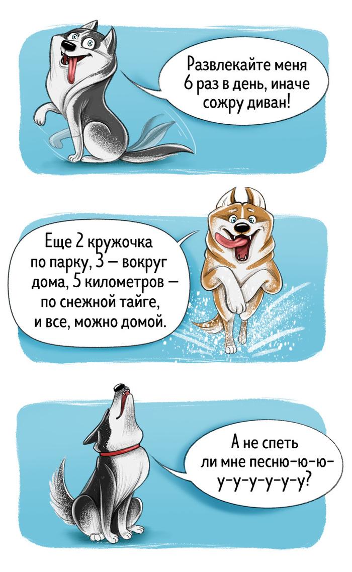 Честный гид по породам собак от первого лица Рисунок, Собака, Длиннопост, ADME, Породы собак, �ллюстрации