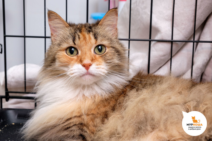 Кошечка Шелли: с правом на надежду… Кот, Приют для животных, Трогательно, Муркоша, В добрые руки, Помощь животным, Длиннопост, Без рейтинга