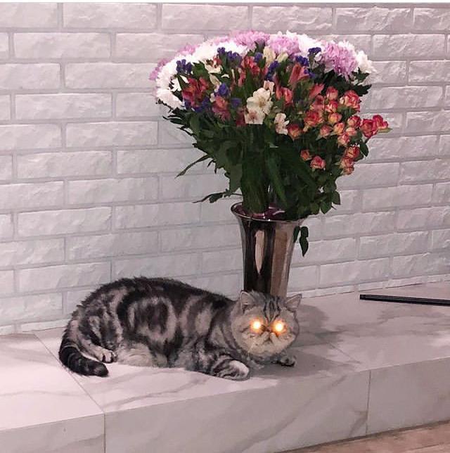 Охраняет сокровище Кот, Бублики, Глаза, Цветы, Шерстяной