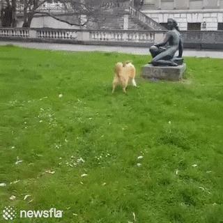 """Ну же, поиграй со мною!"""