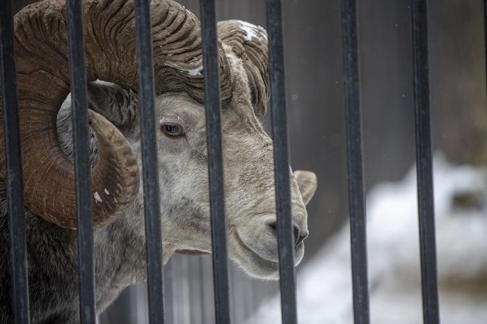 Новосибирский зоопарк Новосибирск, Зоопарк, Фотография, Длиннопост