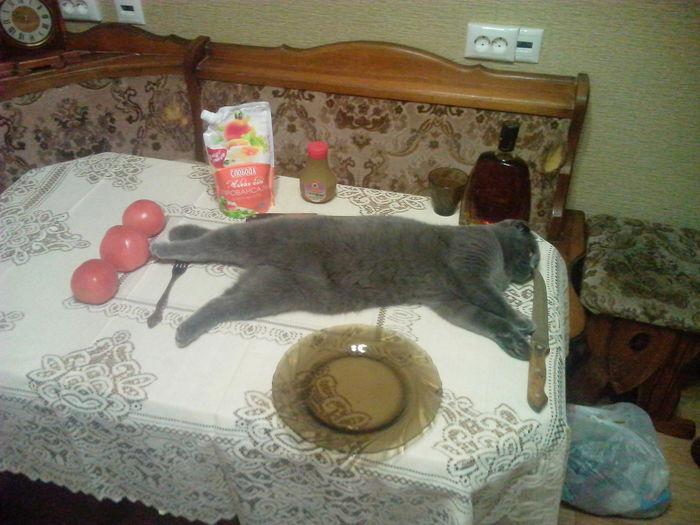 Кошка Кот, Еда, Вкусняшки