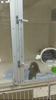 Круголя поймала