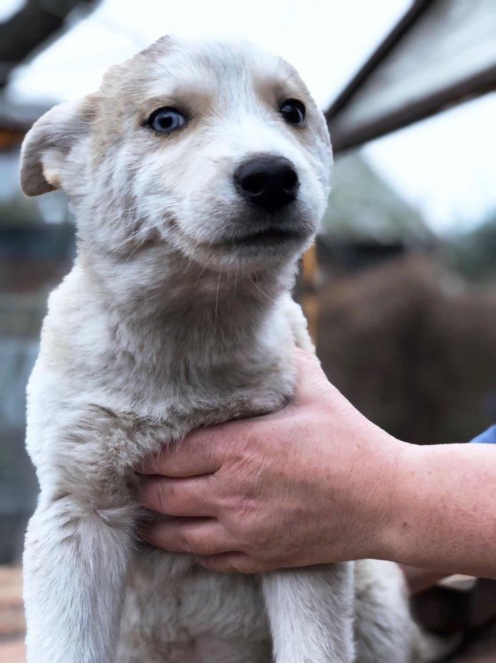 Кому собак Без рейтинга, Ищу хозяна, В добрые руки, Калининградская область, Собака, Щенки, Длиннопост, Балтийск