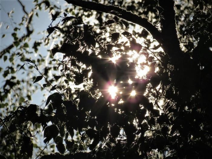 Солнечный контур листьев Природа, Солнце, Листья, Закат, Чудеса природы