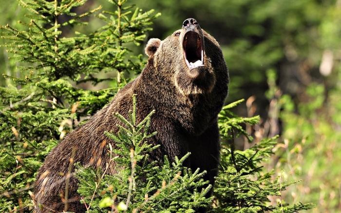 Выживший в Тайге Медведь, Выживание, Якутия, Сварщик, Рассказ, Длиннопост