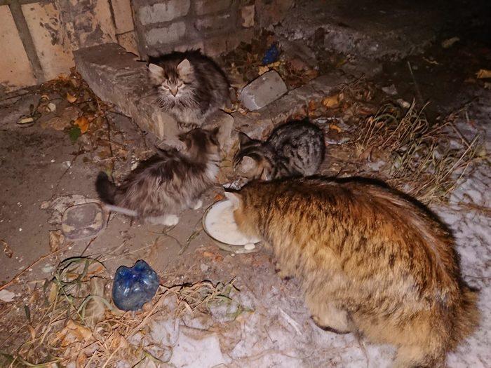 Всем бездомным котейкам, мечтающим обрести любящего хозяина, посвящается Котята, Бездомные, В добрые руки, Твори добро, Кот