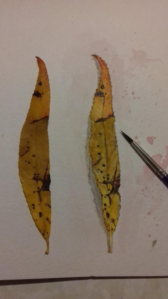 Листок ивы акварелью (слева живой, а справа нарисованный) Акварель, Акварельные миниатюры, Листик, Рисование, Рисунок, Акварелный рисунок, Длиннопост