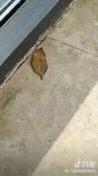 Опавший лист