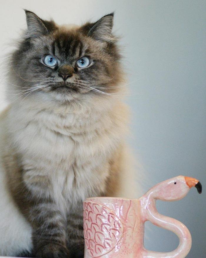 «Как вернуть себе расположение кота»... Кот, Яндекс, Вопрос