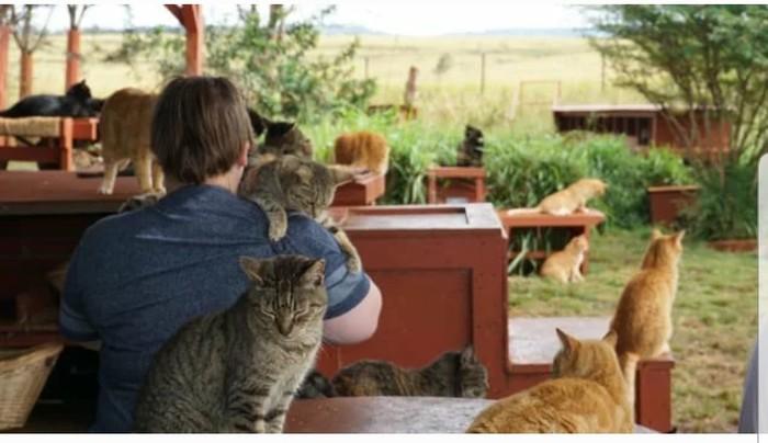 У котиков есть свой остров на Гаваях… Гавайи, Остров, Кот, Добро, Заповедник, Длиннопост
