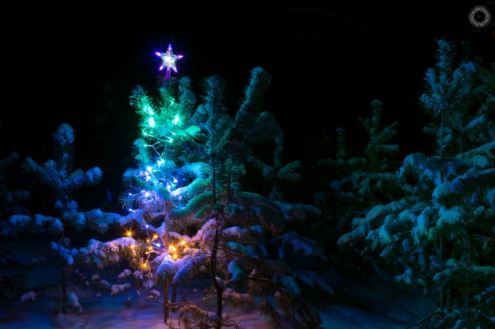 Вам! Для новогоднего настроения! Новый Год, Арти, Артинский район, Елка в лесу, Елка в ночном лесу, Ab87, Алексей балашов, Длиннопост