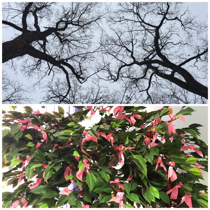 Дерево жизни в отделении онкологии год спустя. Онкология, Рак, Рак молочной железы, Розовая ленточка, Дерево жизни, Длиннопост