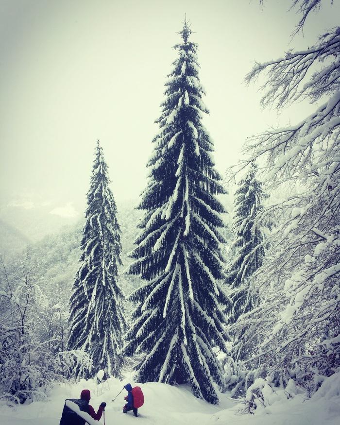 Красавица. Карпаты, Румыния.