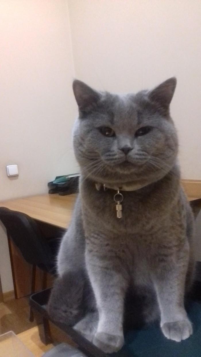 Мой кот Филипп. 6,5 кг счастья.