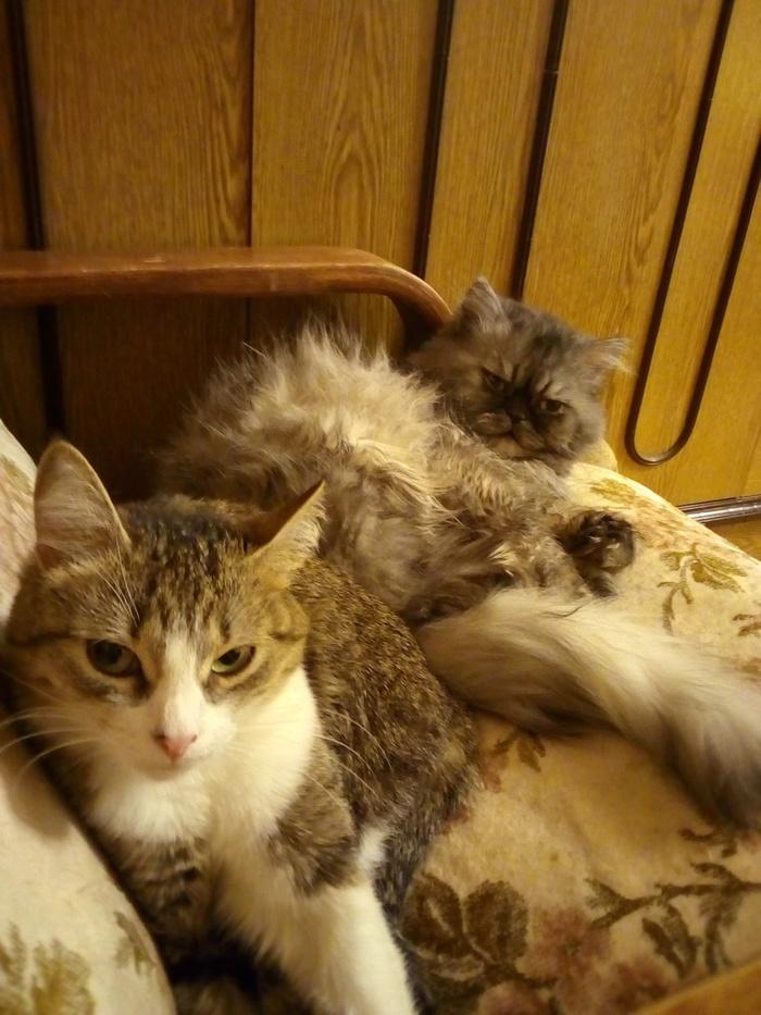 Коти Кот, Дружба, Котомафия, Длиннопост