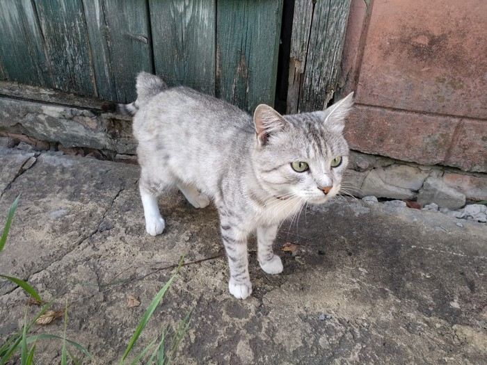 Кот по имени шашлык Кот, Шашлык, Новый Год, Длиннопост