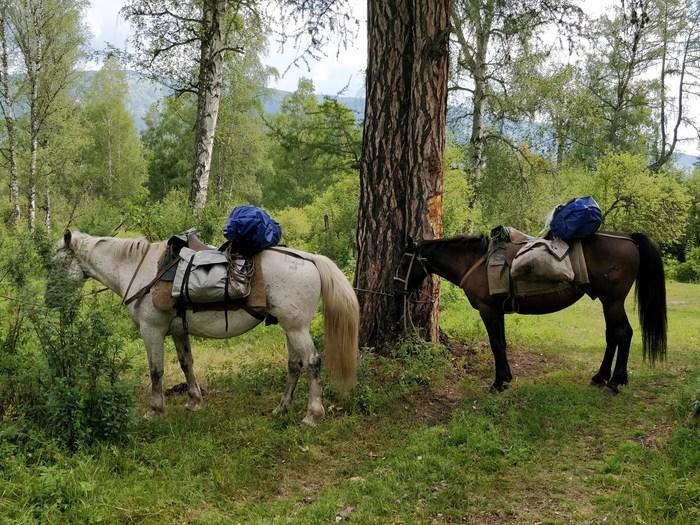 Мой опыт путешествия по Алтаю. Часть 2 + советы собирающимся в конный поход. Путешествия, Алтай, Путешествия по росси, Туризм, Конные прогулки, Палатка, Поход, Длиннопост