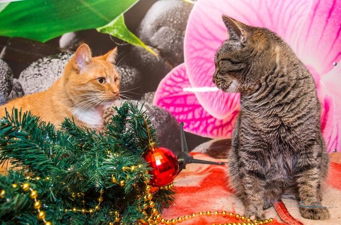 Новогодние котики Кот, Котомафия, Люберцы, Подмосковье, Длиннопост, Новый Год, Без рейтинга, В добрые руки