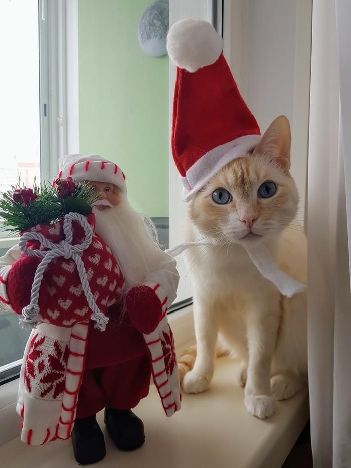 Личный колпак. Кот, Новый Год, Колпак, Длиннопост