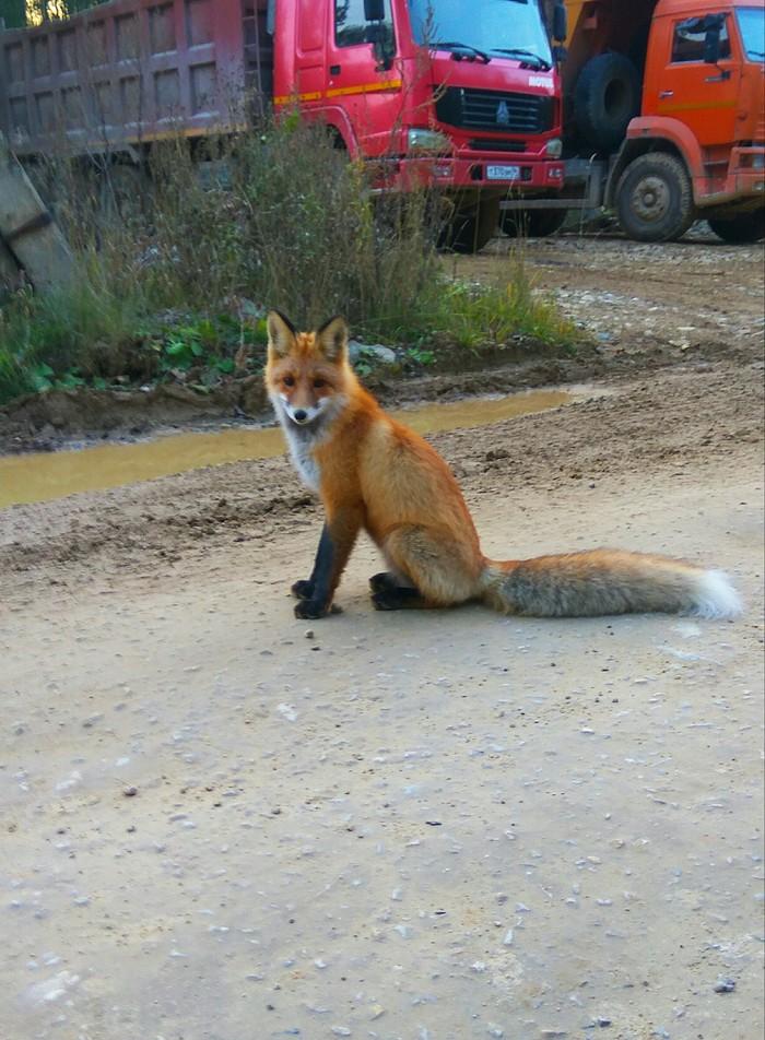 Лисичка встречает Лиса, Работа, Лес