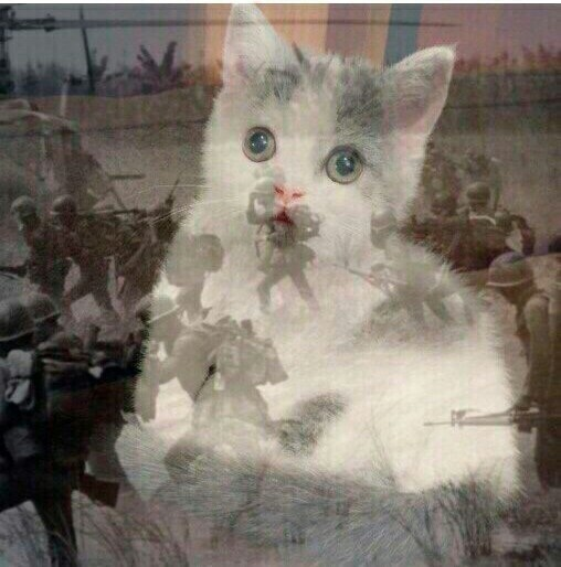 Когда кот услышал звук фейерверков