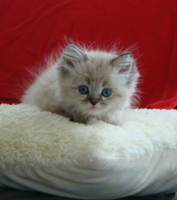 Моя кошка. Фотография, Кот, Домашний любимец, Моя прелесть, Питомец, Длиннопост