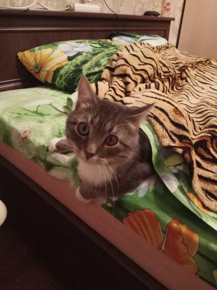 Пропал кот Потерялся кот, Длиннопост, Кот, Тула, Без рейтинга