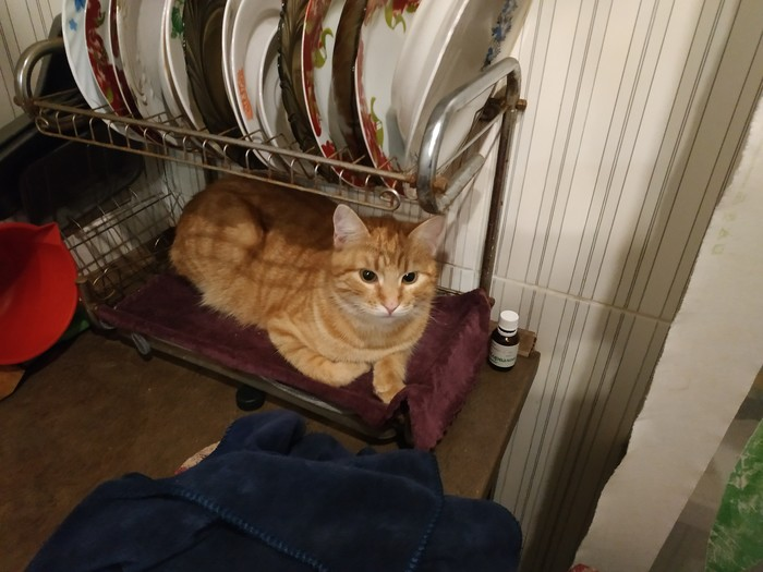 Кот который очень хотел стать тарелкой Кот, Посуда