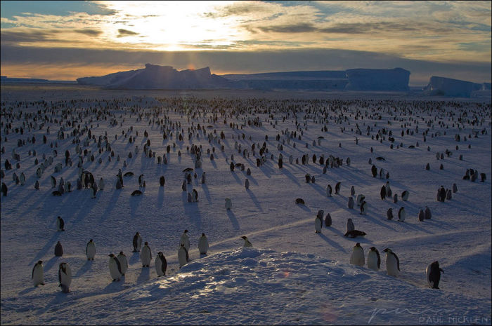 Пингвинье царство