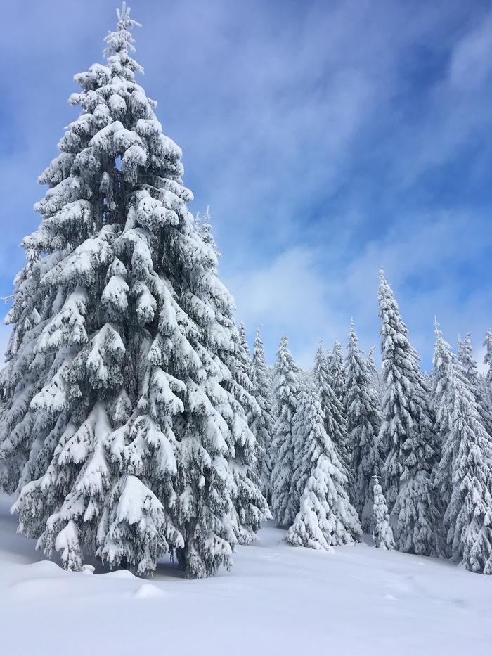 Красиво Горы, Снег, Поход, Карпаты, Елки, Природа, Красота природы, Длиннопост