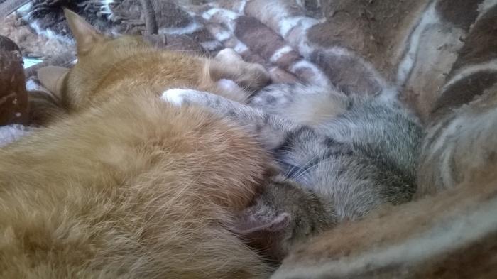 Про рыжих и серых Кот, Характеры кошек