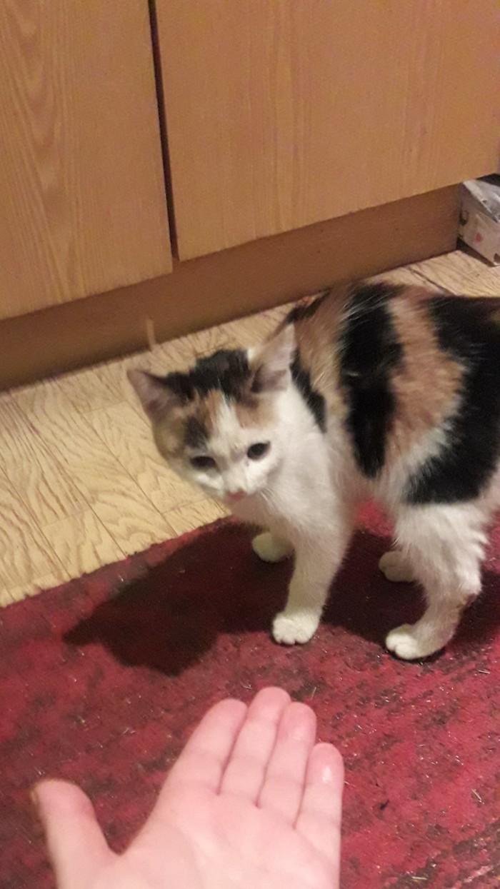 Неожиданности пост: я — котомама Котомафия, Подобрала котенка, Неожиданность, Без рейтинга, Длиннопост, Кот