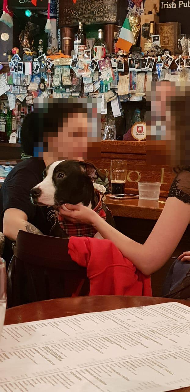 Хороший мальчик в пабе Собака, Хороший мальчик, Паб, Ирландский паб, Москва