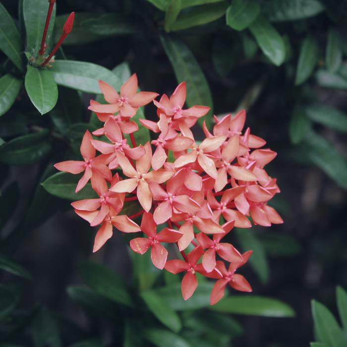 Тайские цветы