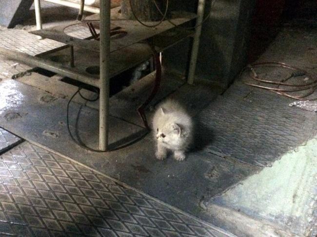 Сибиряки похвастались котами, которые живут у них на работе Новосибирск, Сибирь, Кот, Работа, Милота, Позитив, Длиннопост