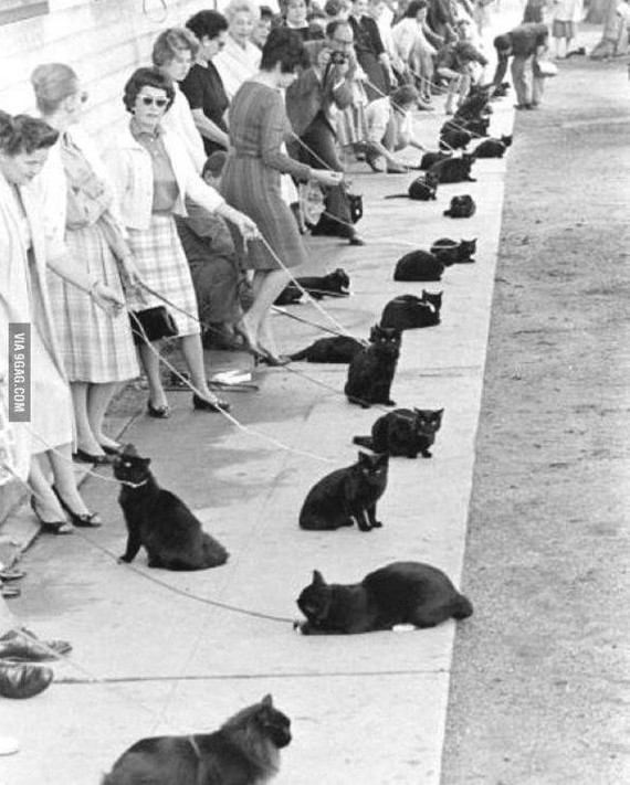 Мы ищем таланты Фотография, Кот, Черный кот, Кастинг, Фильмы ужасов