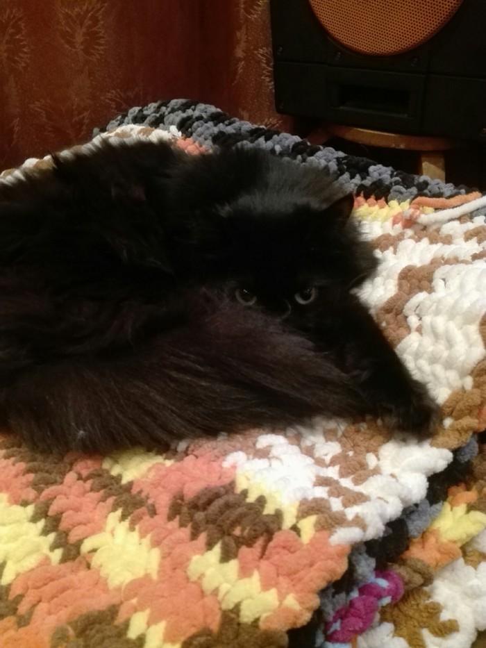 Эти глазки... Кот, Глаза, Черная пантера