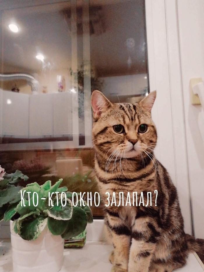 Комиксы про моего кота Кот, Домашние животные, Комиксы, Длиннопост