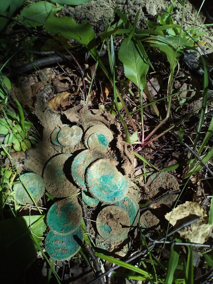Прогулка по лесу Клад, Медные монеты, Нумизматика, Кошелек, Длиннопост