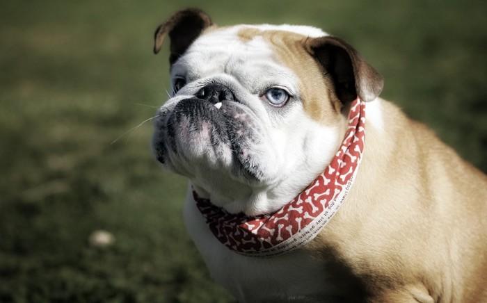 Собачья любовь Собака, Грустное, Деревня, Любовь, Мат, Длиннопост