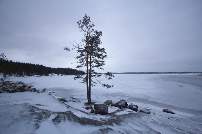 Дерево на берегу Фотография, Природа, Финляндия, Начинающий фотограф