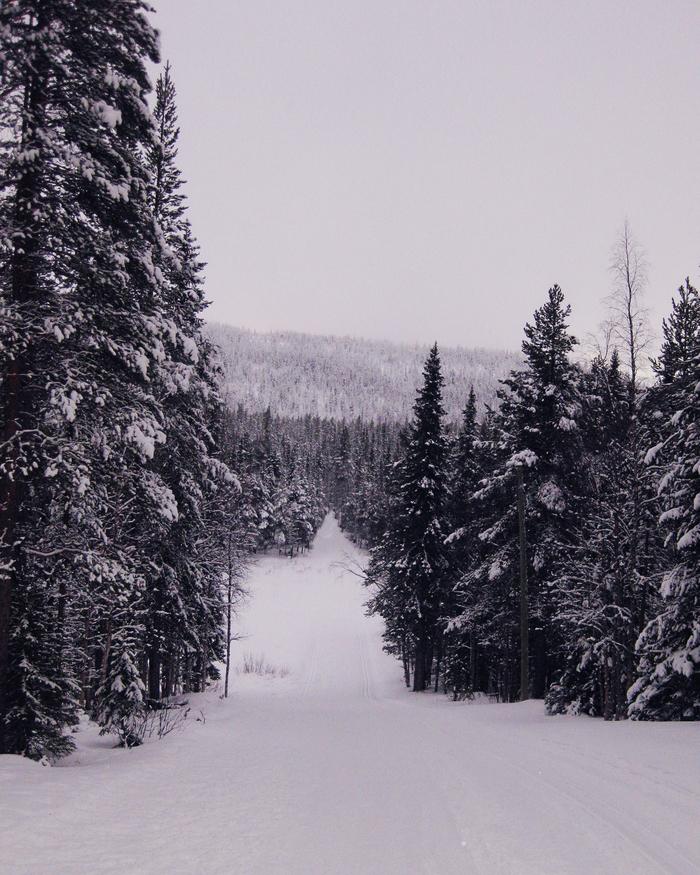 Зимний лес в Финляндии