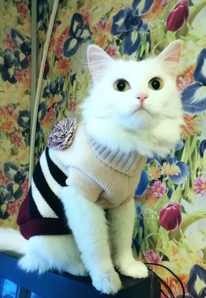 Кошка милашка