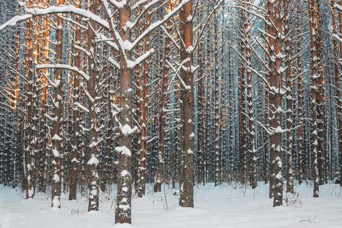 Безмятежность Лес, Зима, Нижний Новгород, Керженец, Природа, Фотография