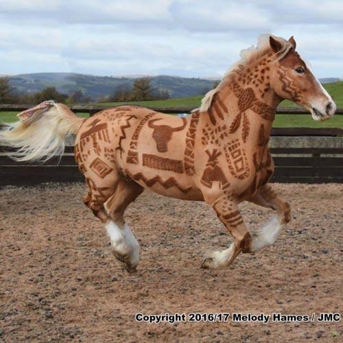 Женщина стала парикмахером для лошадей и превратила стрижку животных в искусство. Животные, Творчество, Парикмахер, Искусство, Видео, Длиннопост